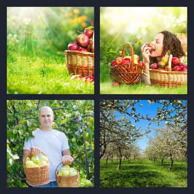 4-pics-1-word-orchard