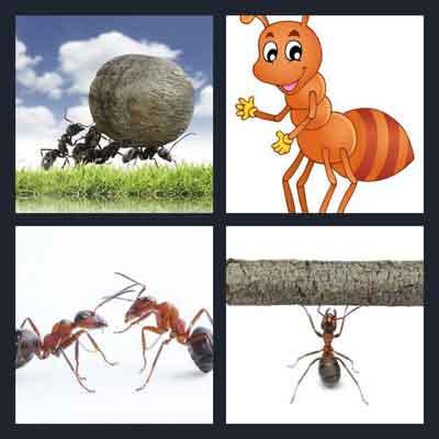 4-pics-1-word-ant