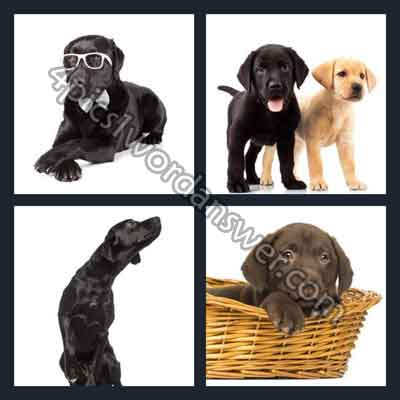 4-pics-1-word-labrador