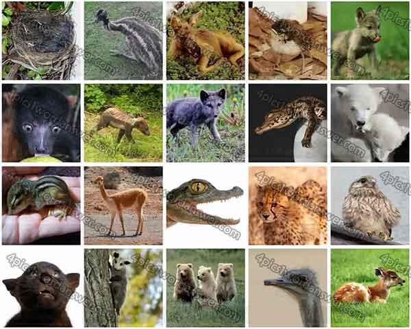 100-pics-baby-animals-level-41-60-answers