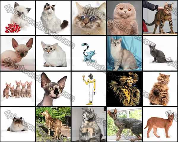 100 pic quiz cats answers