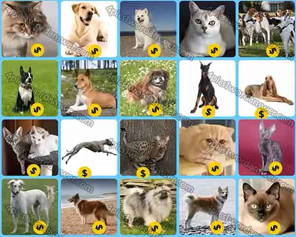 Infinite Pics Cats And Dogs Answers