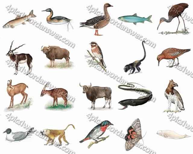100-pics-animal-kingdom-level-61-80-answers