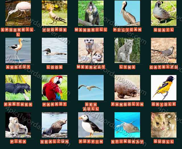 guess-animal-2015-level-141-160-answers