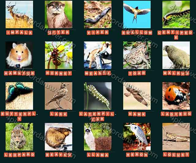 guess-animal-2015-level-81-100-answers
