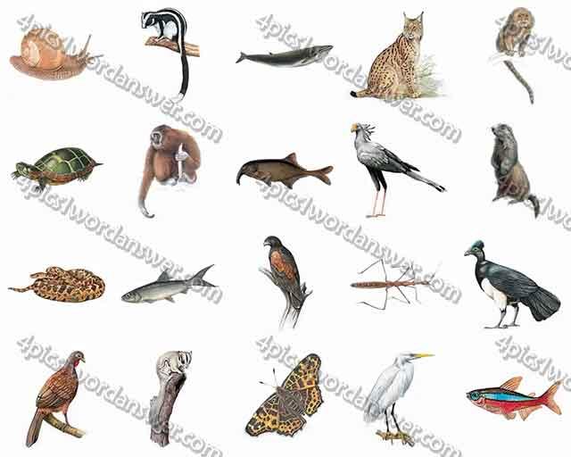 100-pics-animal-kingdom-2-level-61-80-answers
