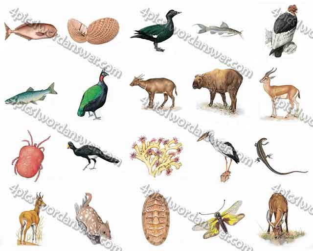 100-pics-animal-kingdom-2-level-81-100-answers