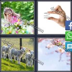 4-pics-1-word-daily-puzzle-mar-17-2016