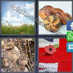 4-pics-1-word-daily-puzzle-june-17-2016