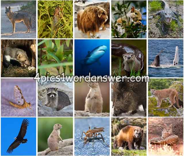 100-pics-us-wildlife-level-21-40-answers