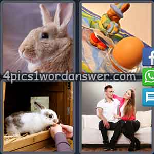 4-pics-1-word-daily-puzzle-march-11-2018