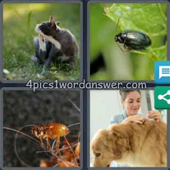 4-pics-1-word-daily-puzzle-july-13-2020