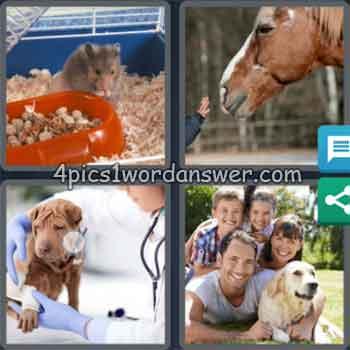 4-pics-1-word-daily-puzzle-november-8-2020