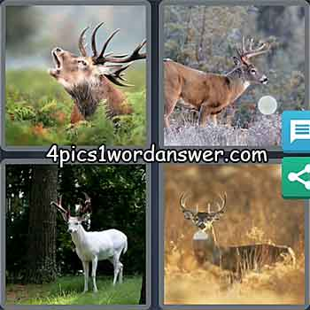 4-pics-1-word-daily-puzzle-march-2-2021