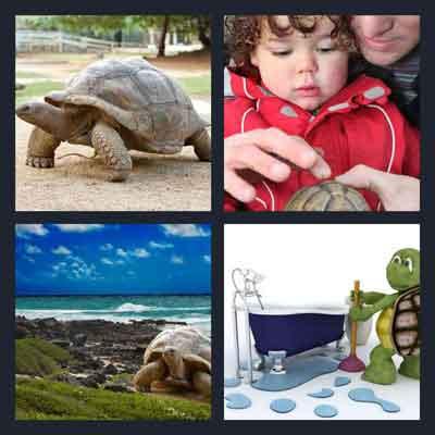 4-pics-1-word-tortoise