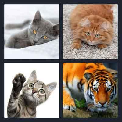 4-pics-1-word-cat