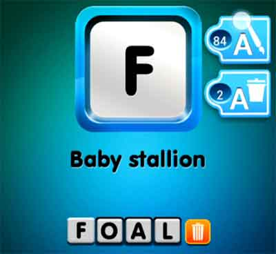 one-clue-baby-stallion