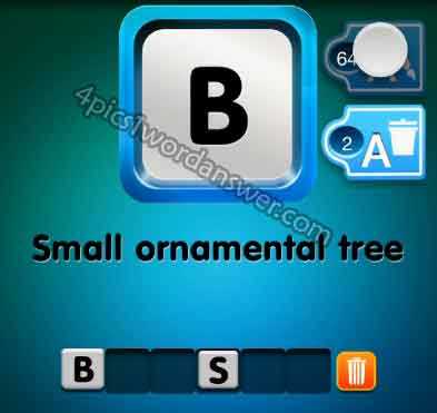 one-clue-small-ornamental-tree