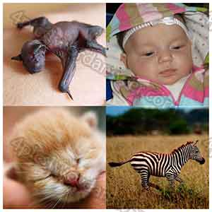 100-pics-baby-animals-answers