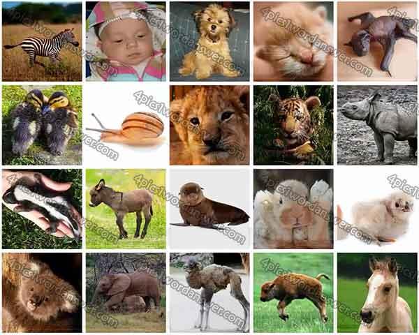 100-pics-baby-animals-cheats