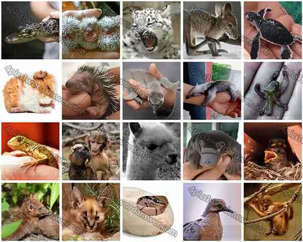 100-pics-baby-animals-level-61-80-answers