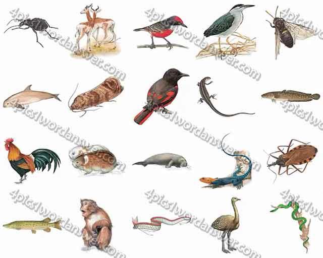 100-pics-animal-kingdom-level-81-100-answers