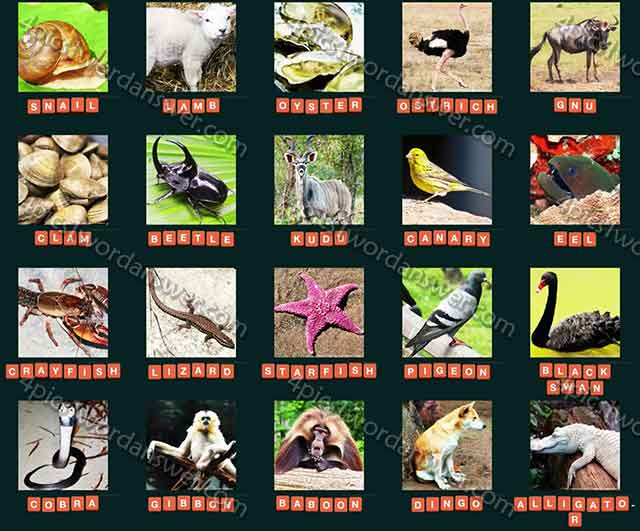 guess animal 2015 level 61 80 answers 4 pics 1 word