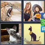4-pics-1-word-daily-puzzle-january-1-2017