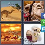 4-pics-1-word-daily-puzzle-january-28-2017