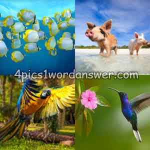 4-pics-1-word-daily-puzzle-march-8-2019
