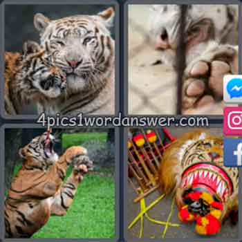 4-pics-1-word-daily-puzzle-february-1-2020