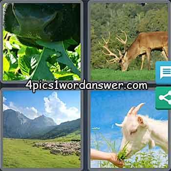 4-pics-1-word-daily-puzzle-may-6-2021