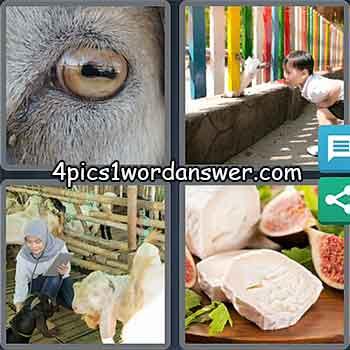 4-pics-1-word-daily-puzzle-may-9-2021